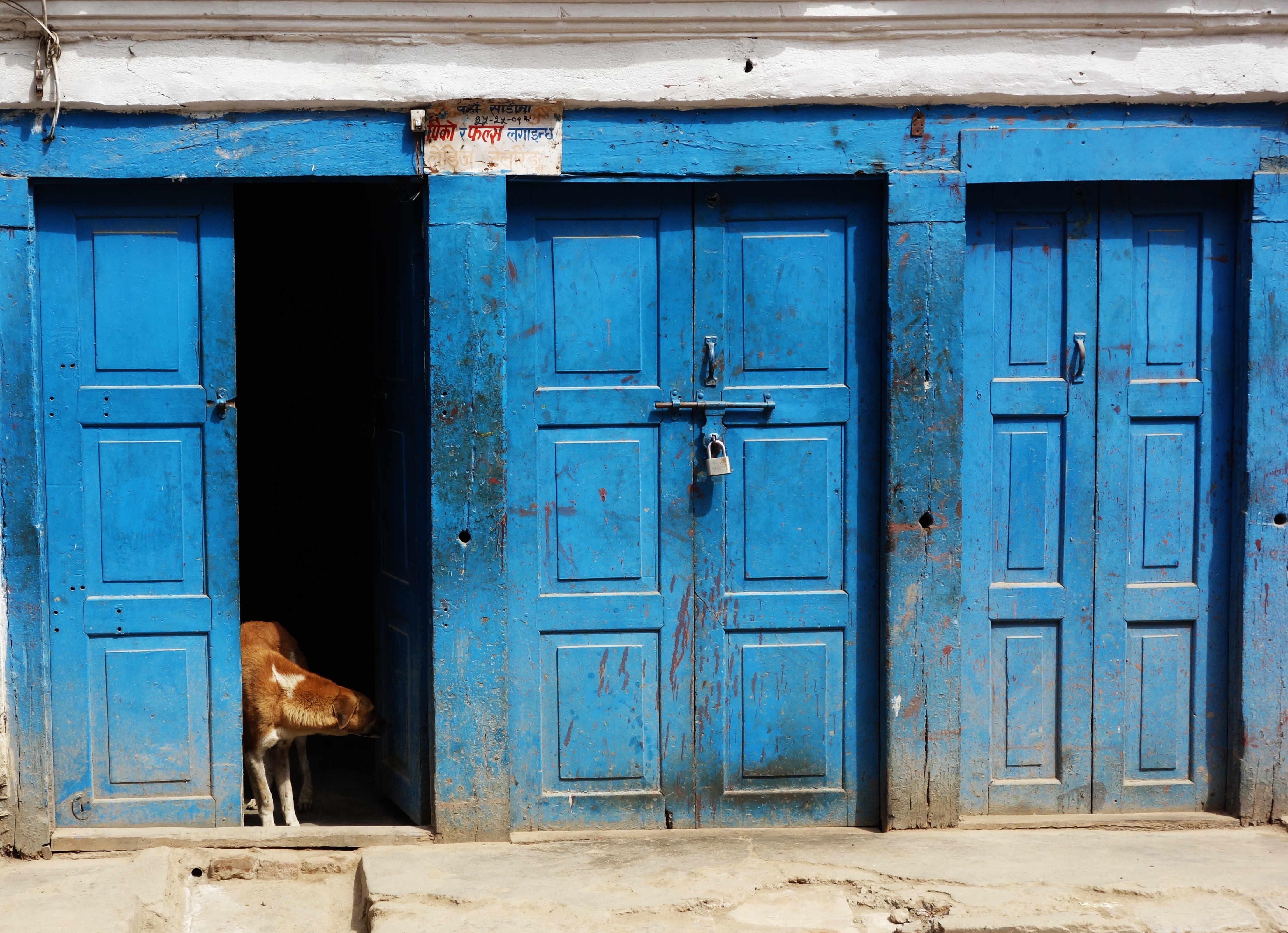 Nepal Kathmandu Hund vor Tür