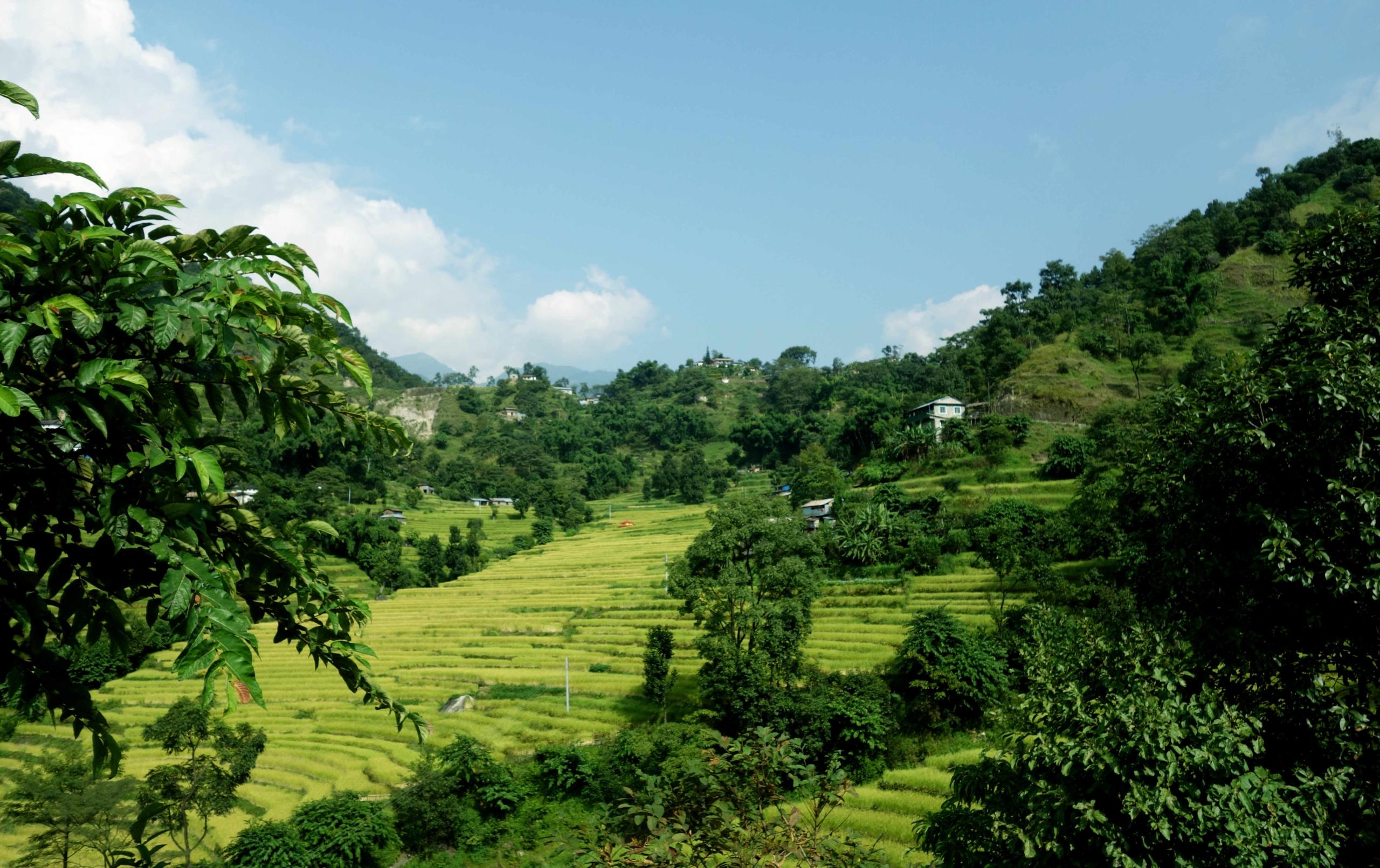Annapurna Circuit Bahundandi Reisfeld