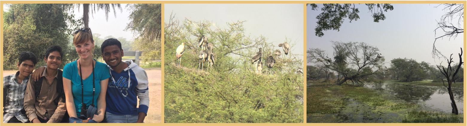 Indien Reisetipps Keoladeo Nationalpark