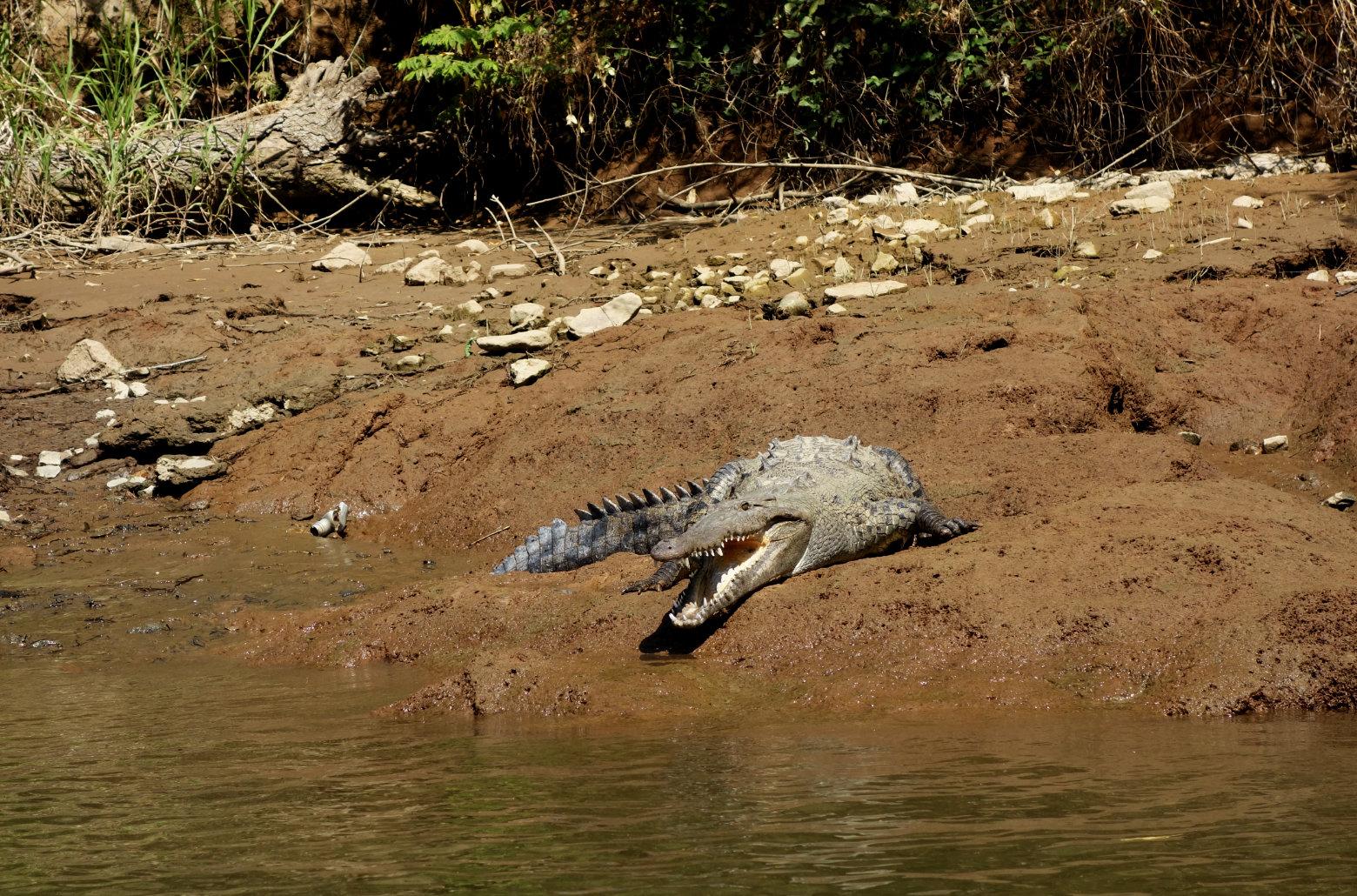 Mexiko Cañon Sumidero Krokodil