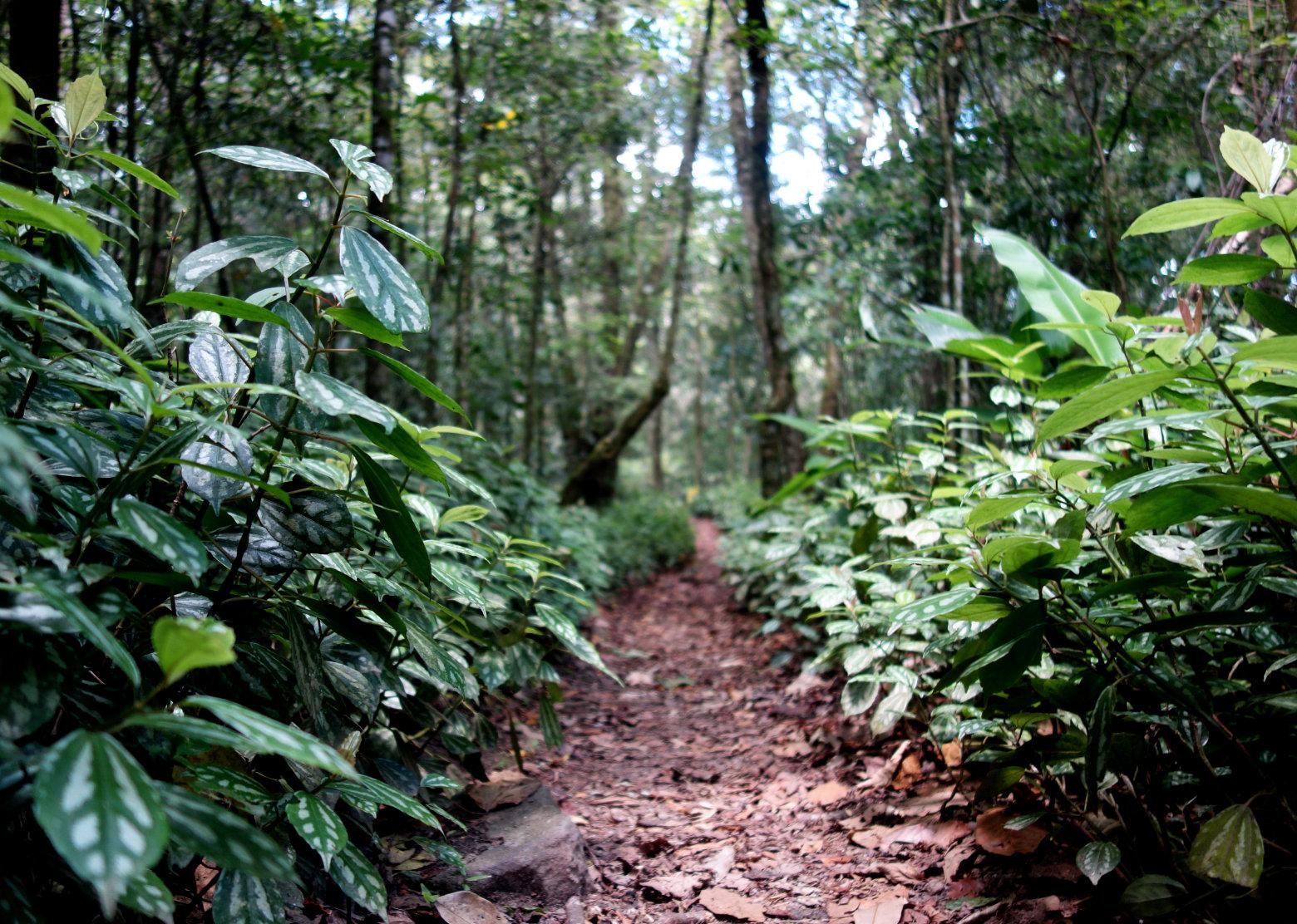 Nicaragua Norden Selva Negra Weg