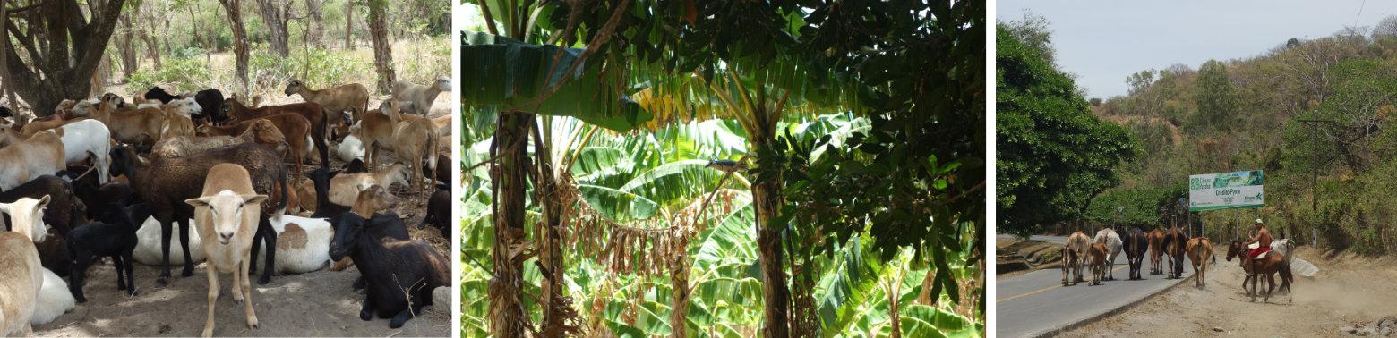 Nicaragua Isla de Ometepe Natur