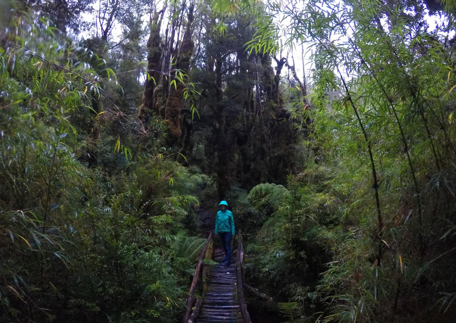 Chile Carretera Austral Parque Pumalin