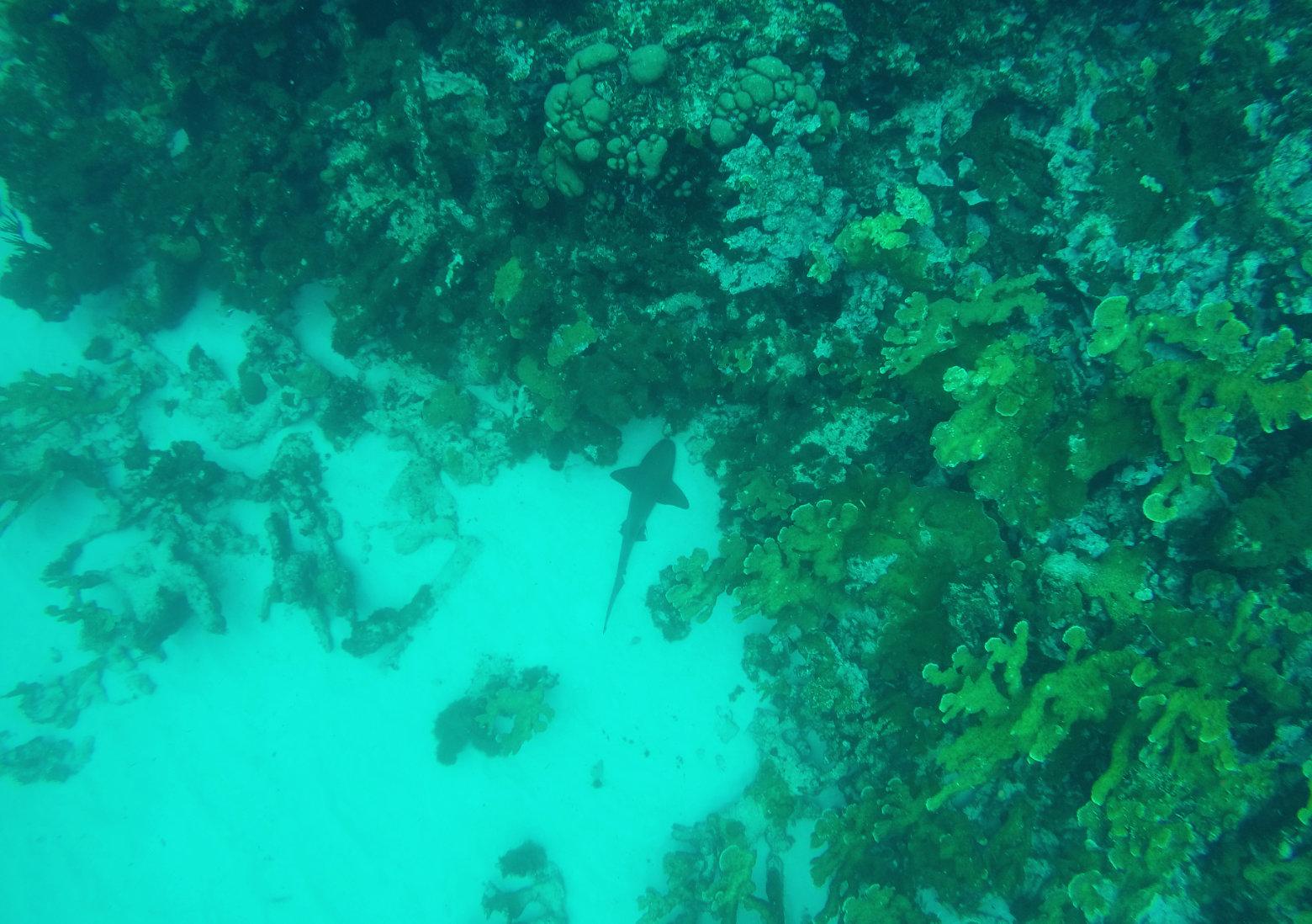 Nicaragua Little Corn Island Hai