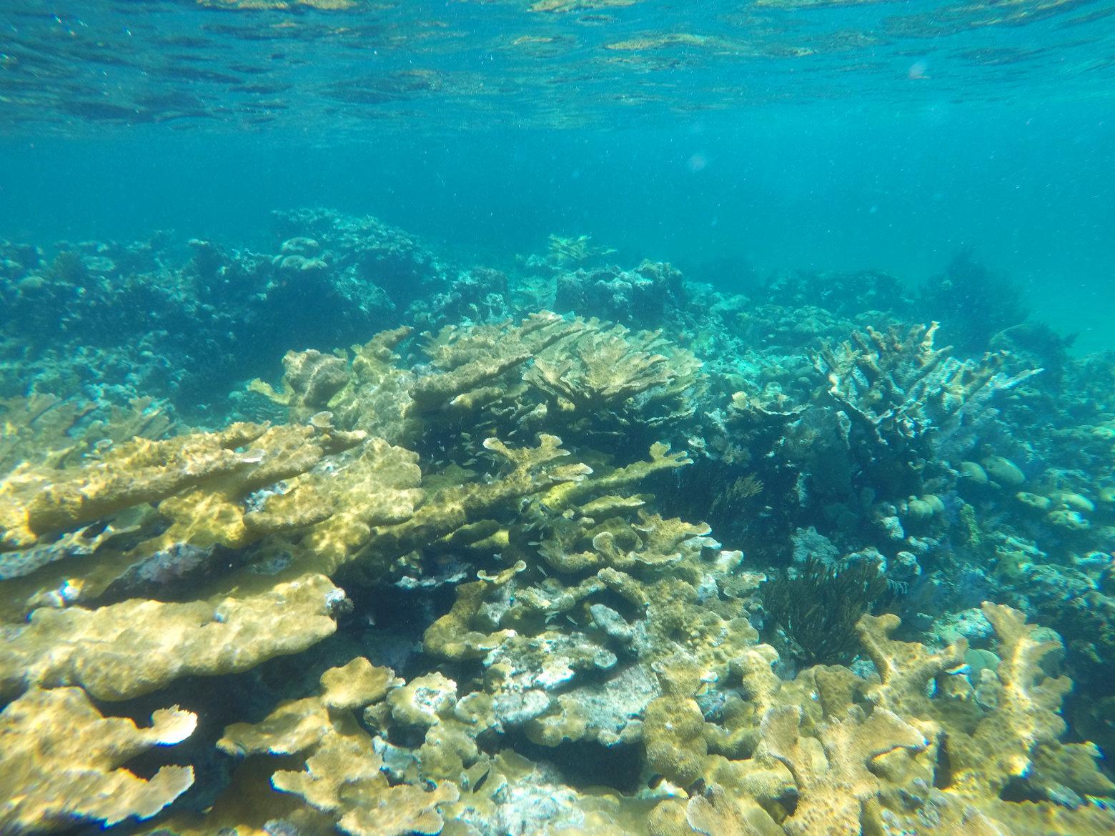Nicaragua Little Corn Island Korallenriff