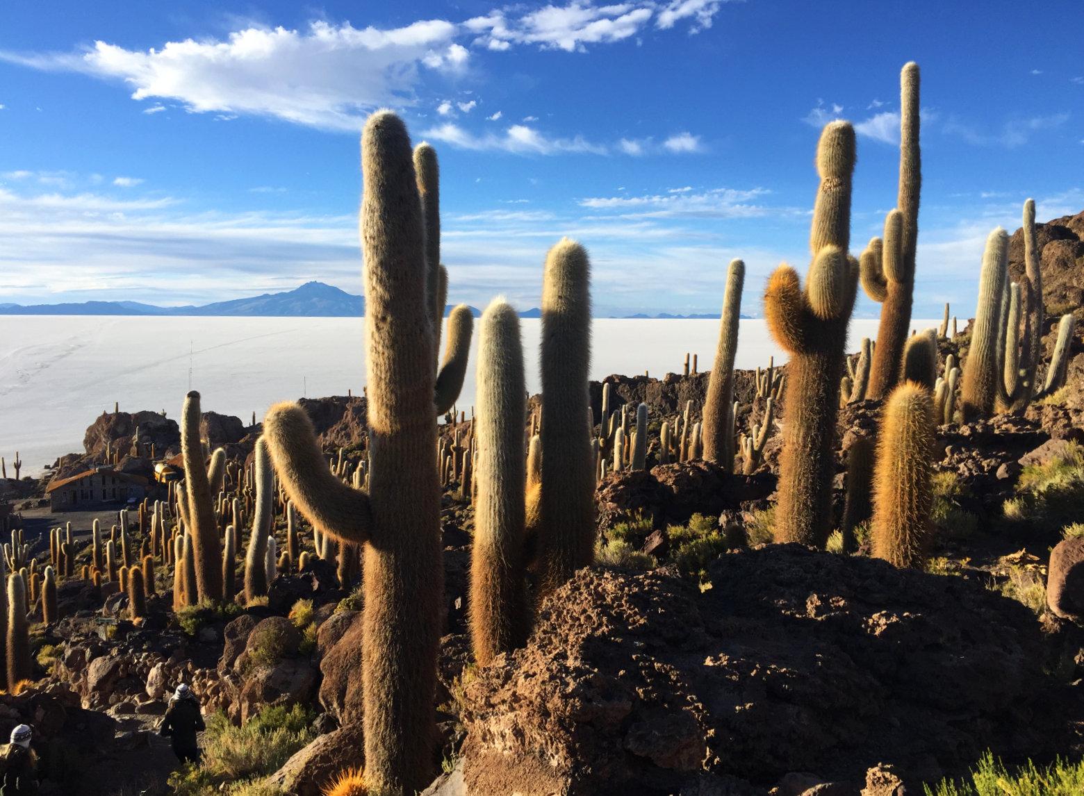 Bolivien Salar de Uyuni Inkahuasi Kaktusinsel