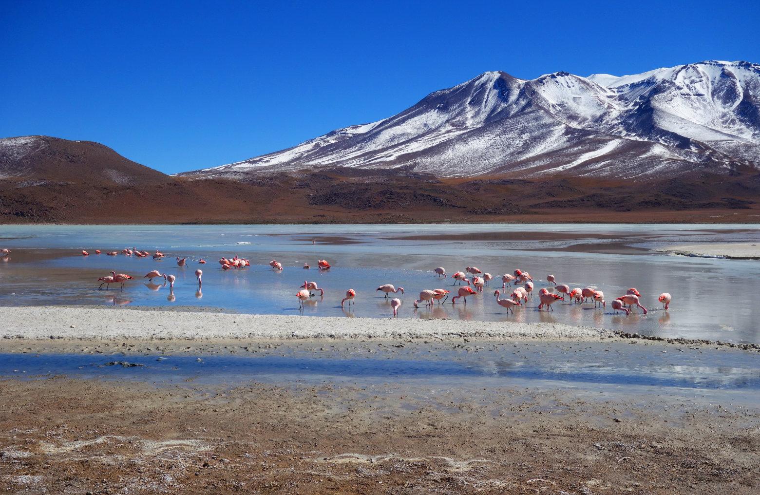 Bolivien Salar de Uyuni Flamingos