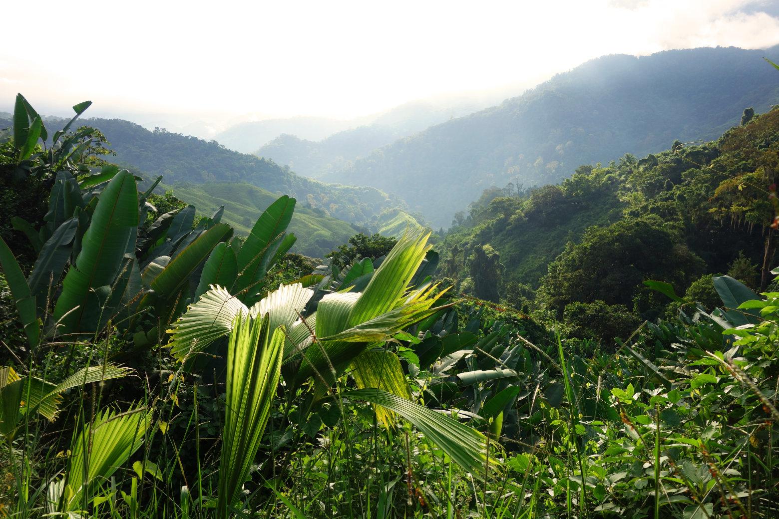 Ciudad Perdida Dschungel Landschaft