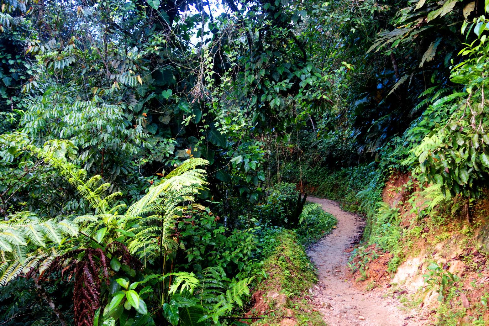 Ciudad Perdida Weg im Dschungel