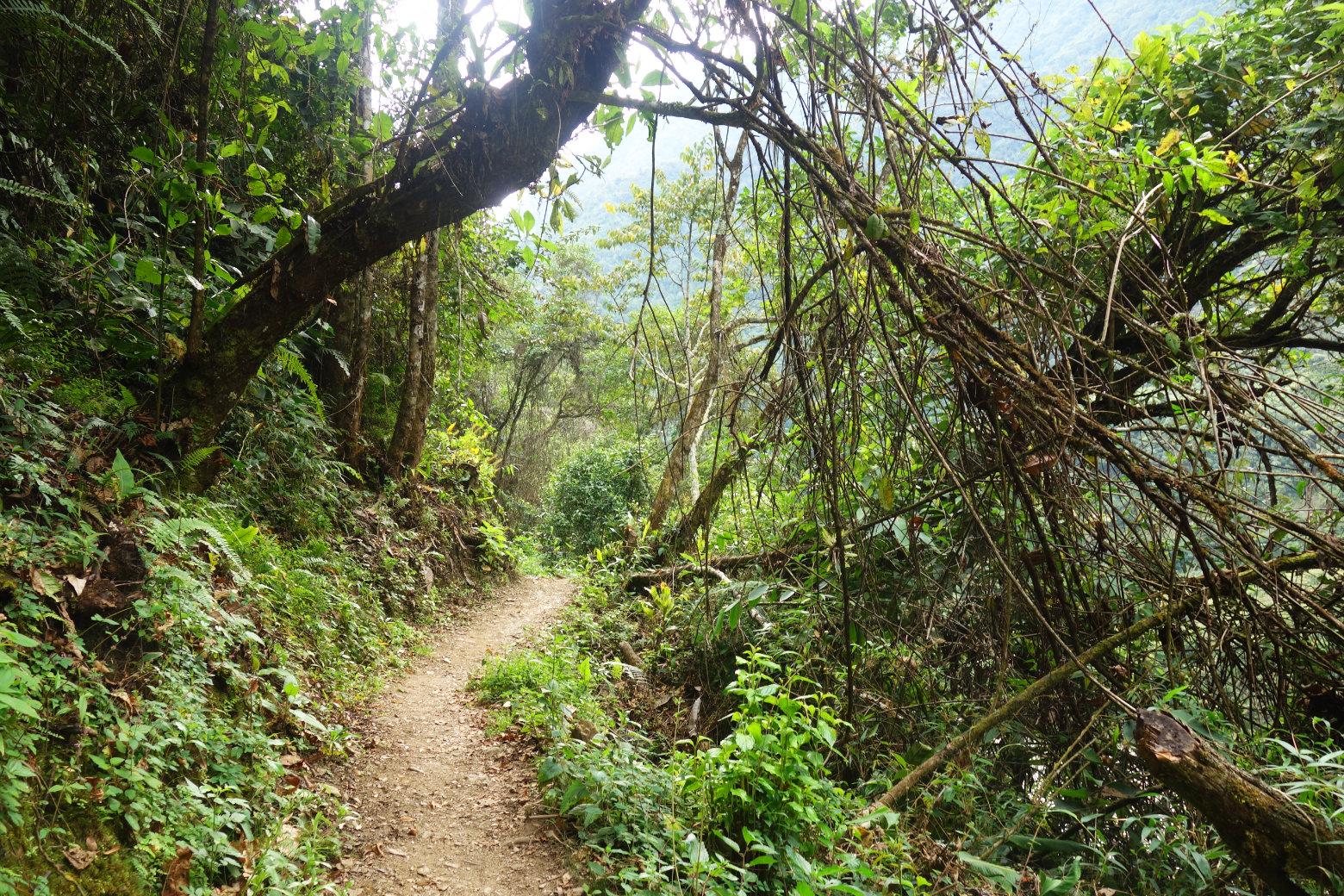 Salkantay Trek Dschungel