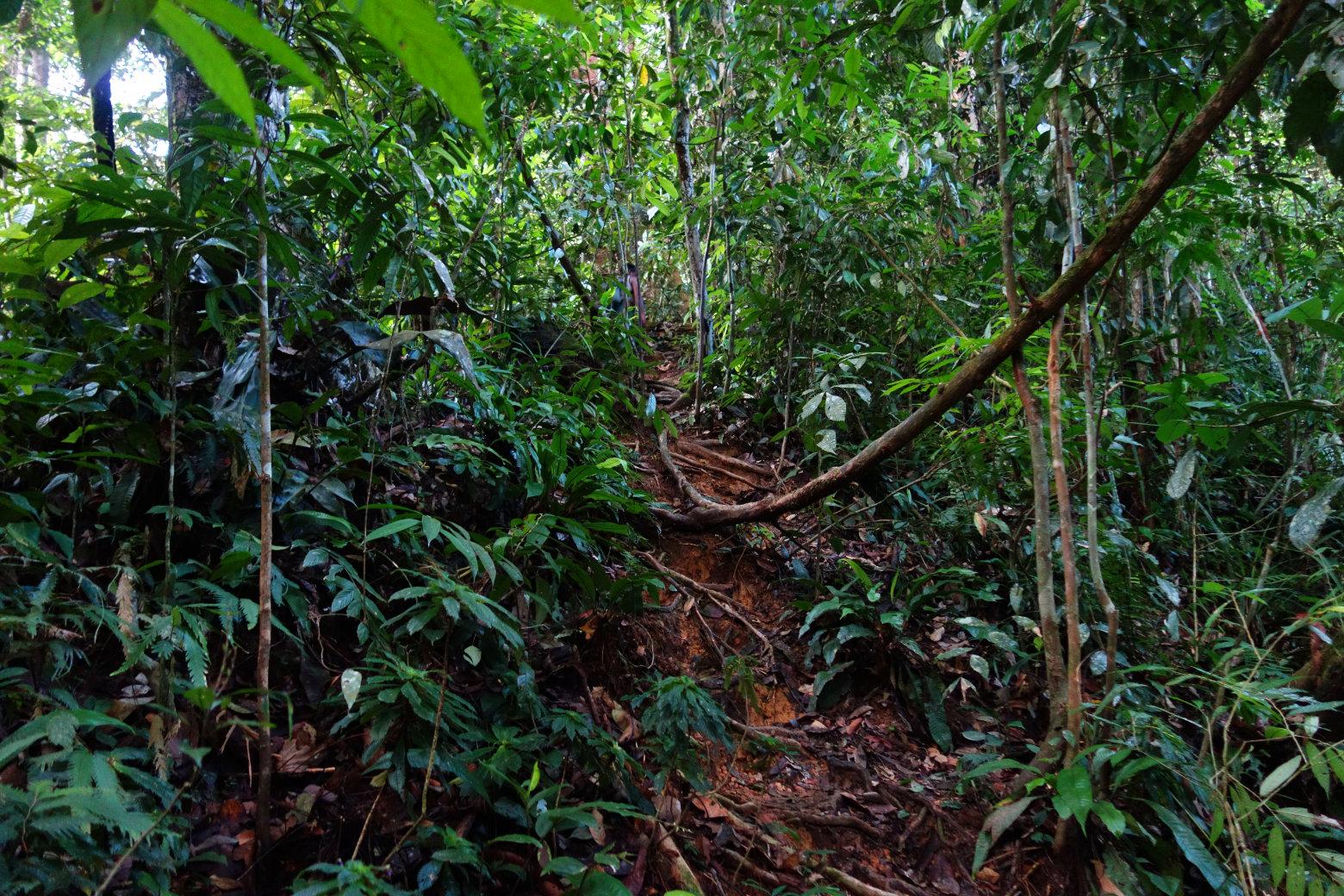 Bukit Lawang Dschungel