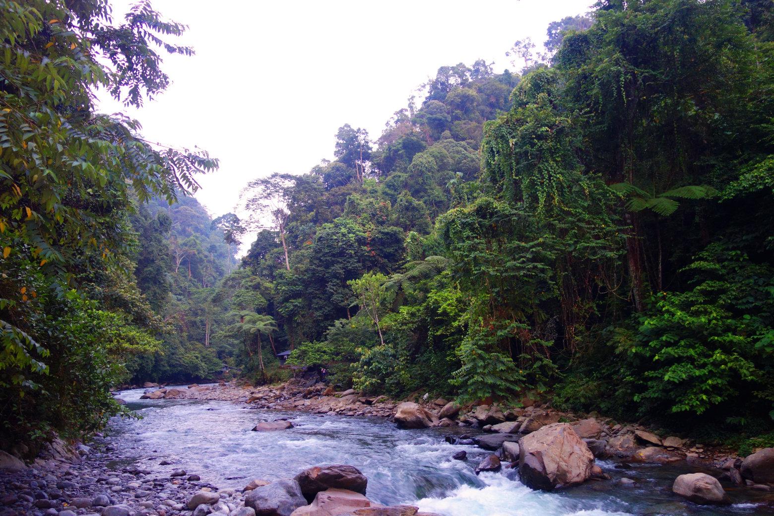 Bukit Lawang Fluss