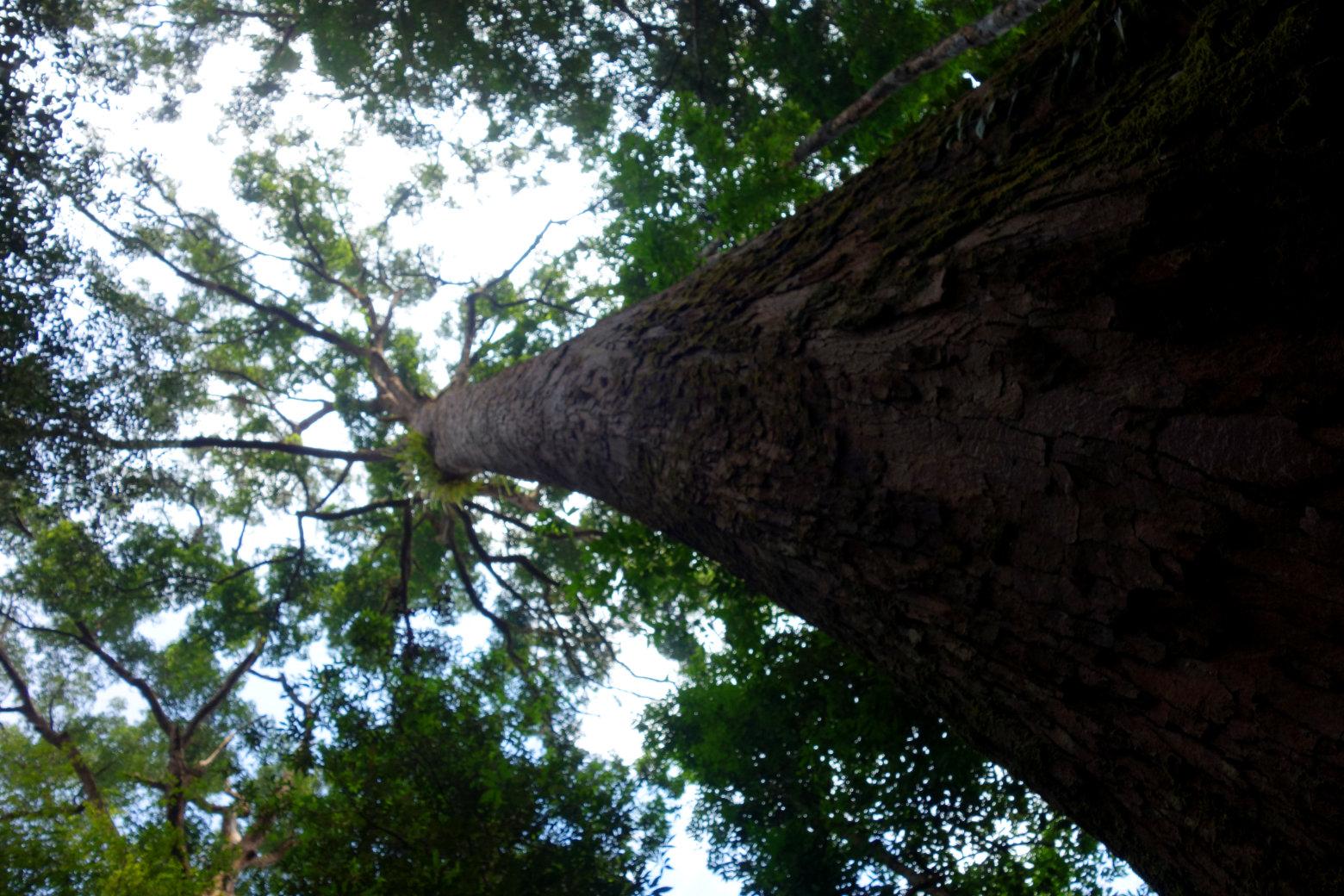 Dschungel Baum