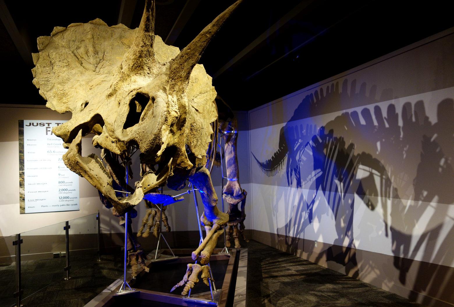 Boston Museum of Science Dinosaurier