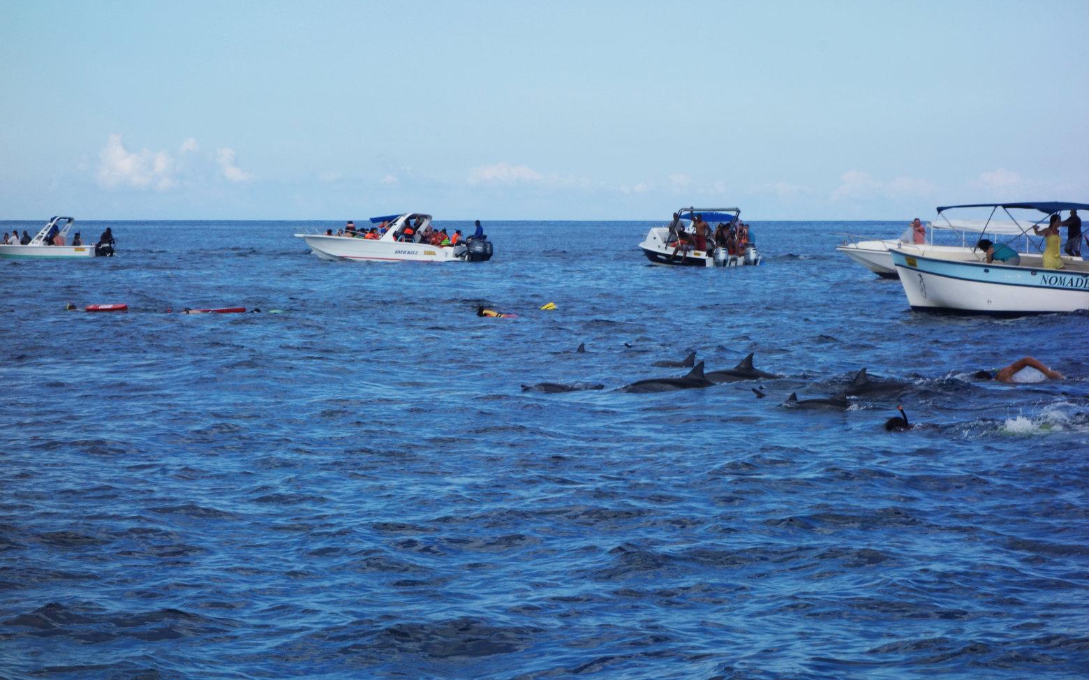 Mauritius Delfin Tour