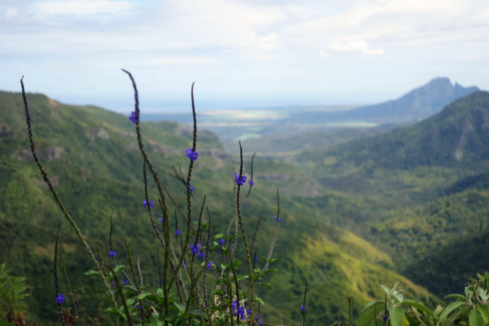 Mauritius Black River Gorges Viewpoint