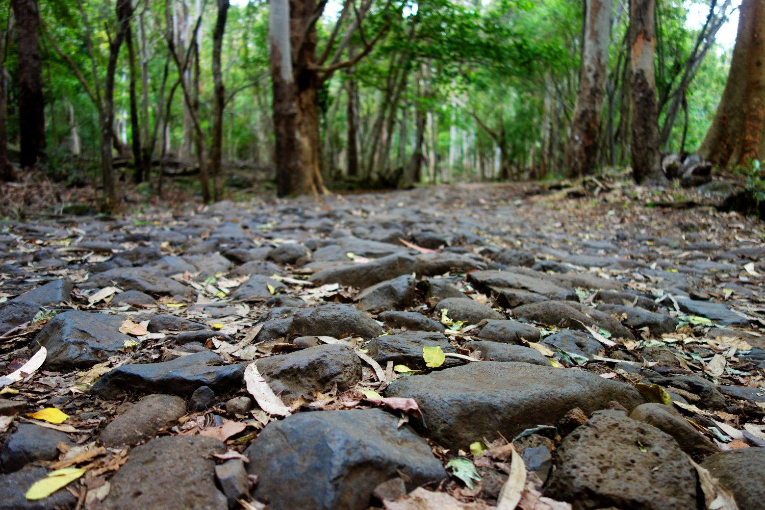 Mauritius Black River Gorges Steinweg