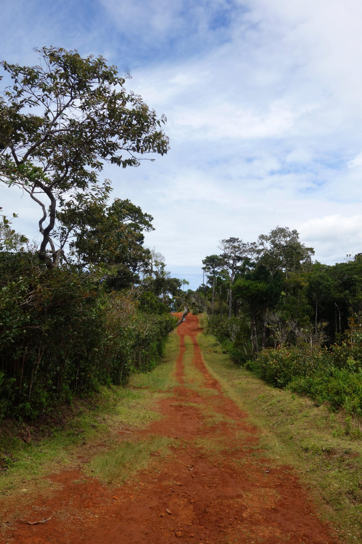 Mauritius Black River Gorges roter Weg mit Bäumen