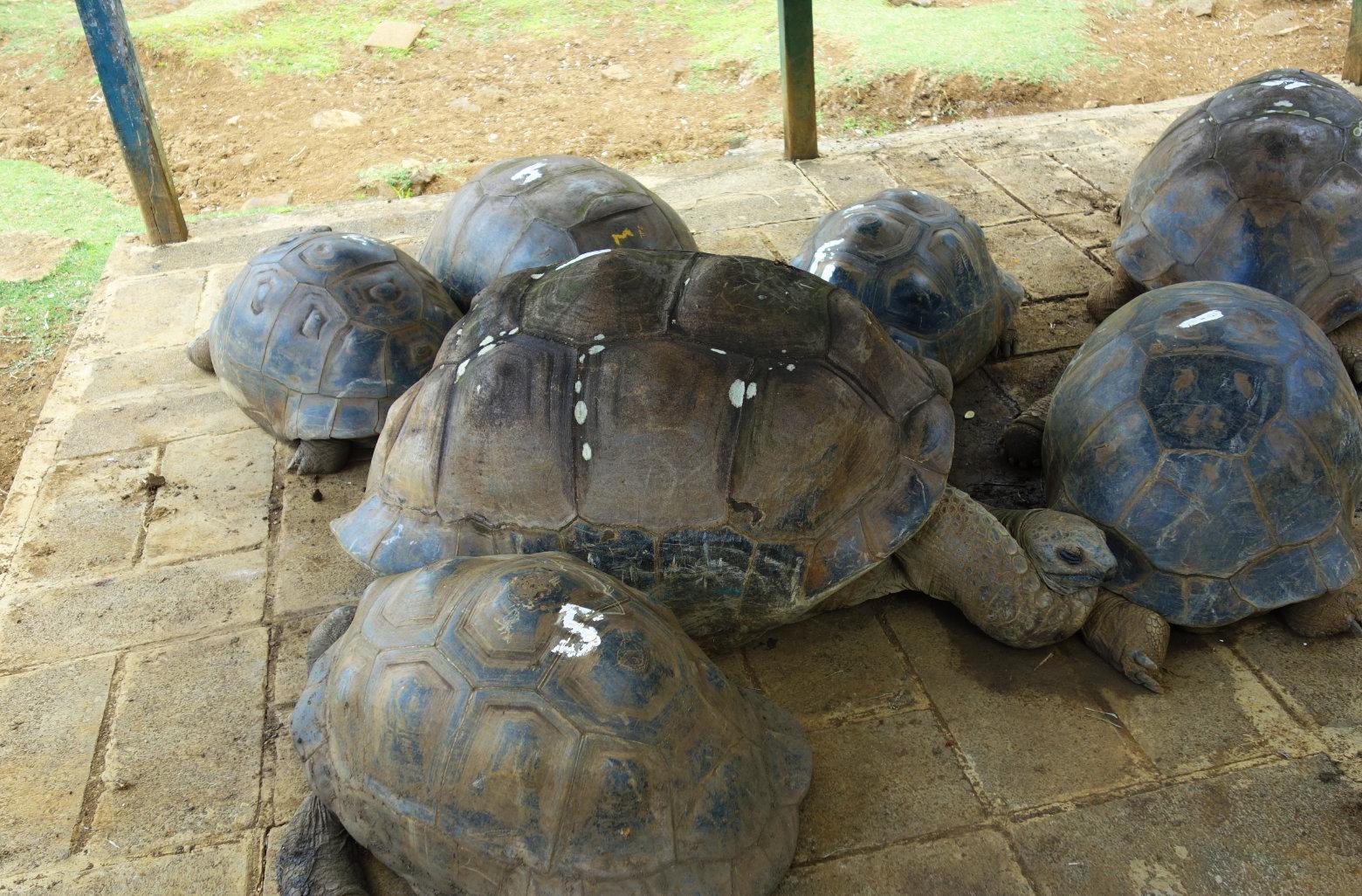 Botanischer Garten Riesenschildkröten