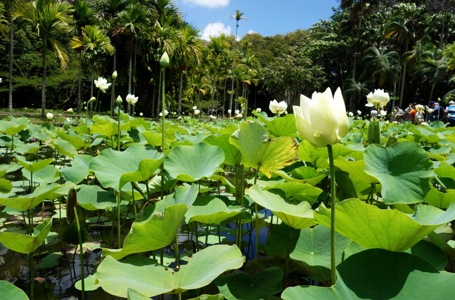 Botanischer Garten Lilienteich