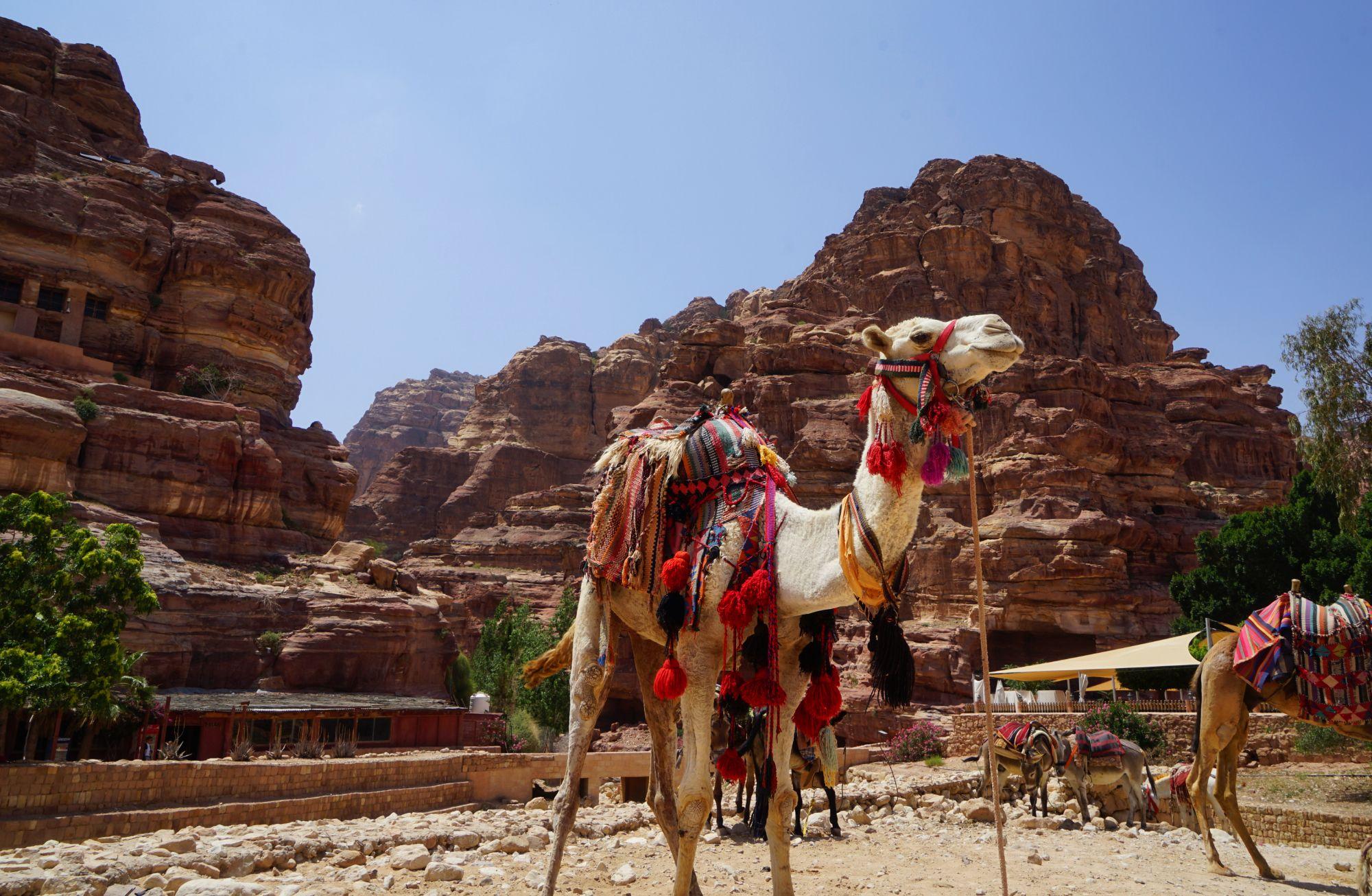 Petra City Centre Kamel