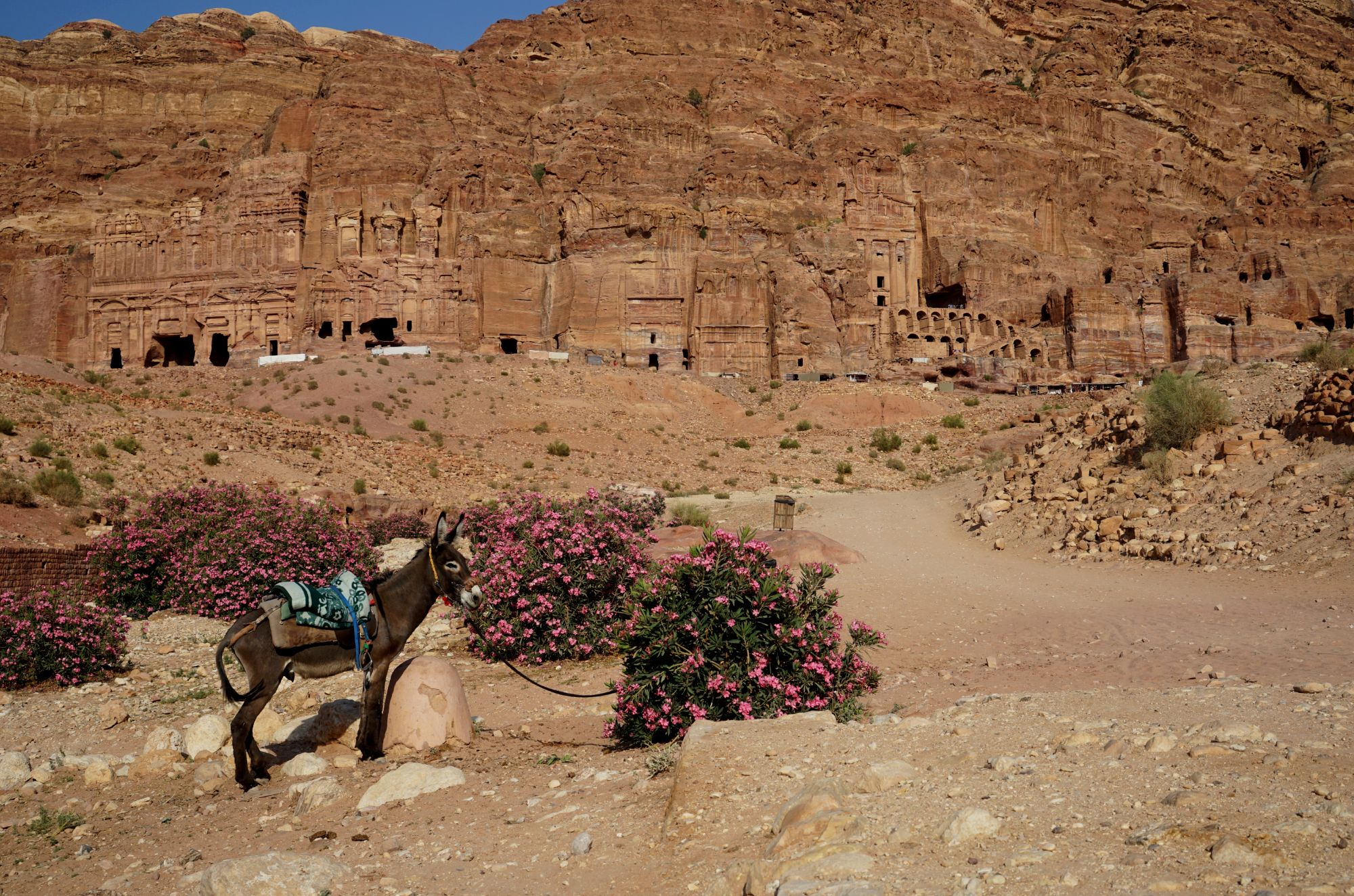 Petra Royal Tombs mit Esel