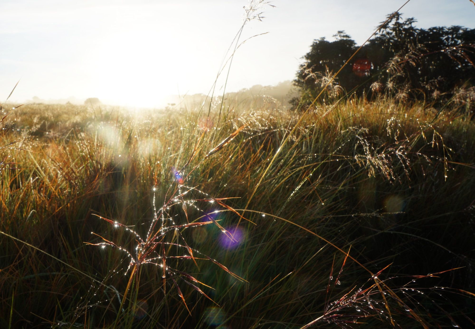 Horton Plains Feld Sonnenaufgang