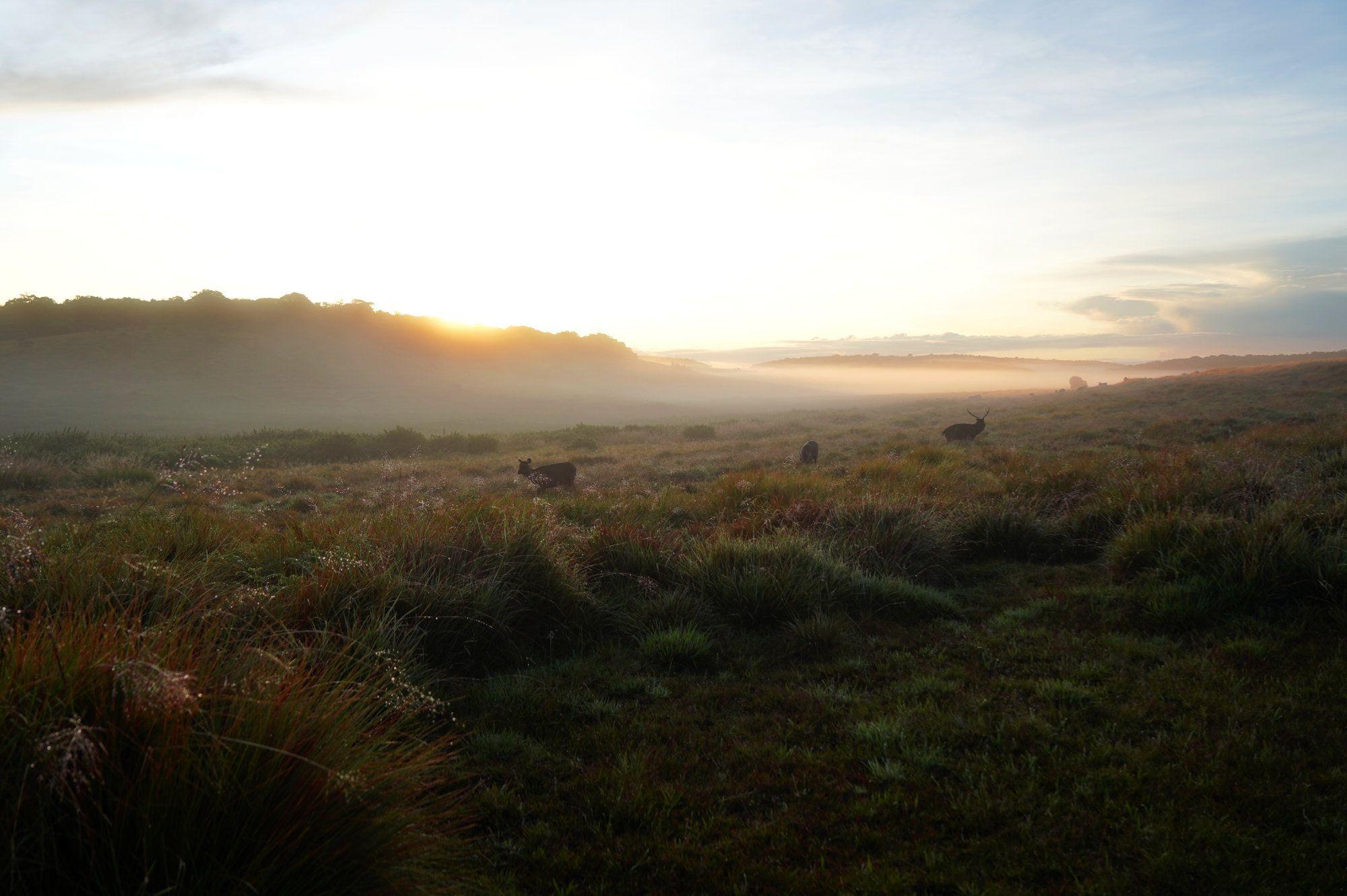 Horton Plains Rehe