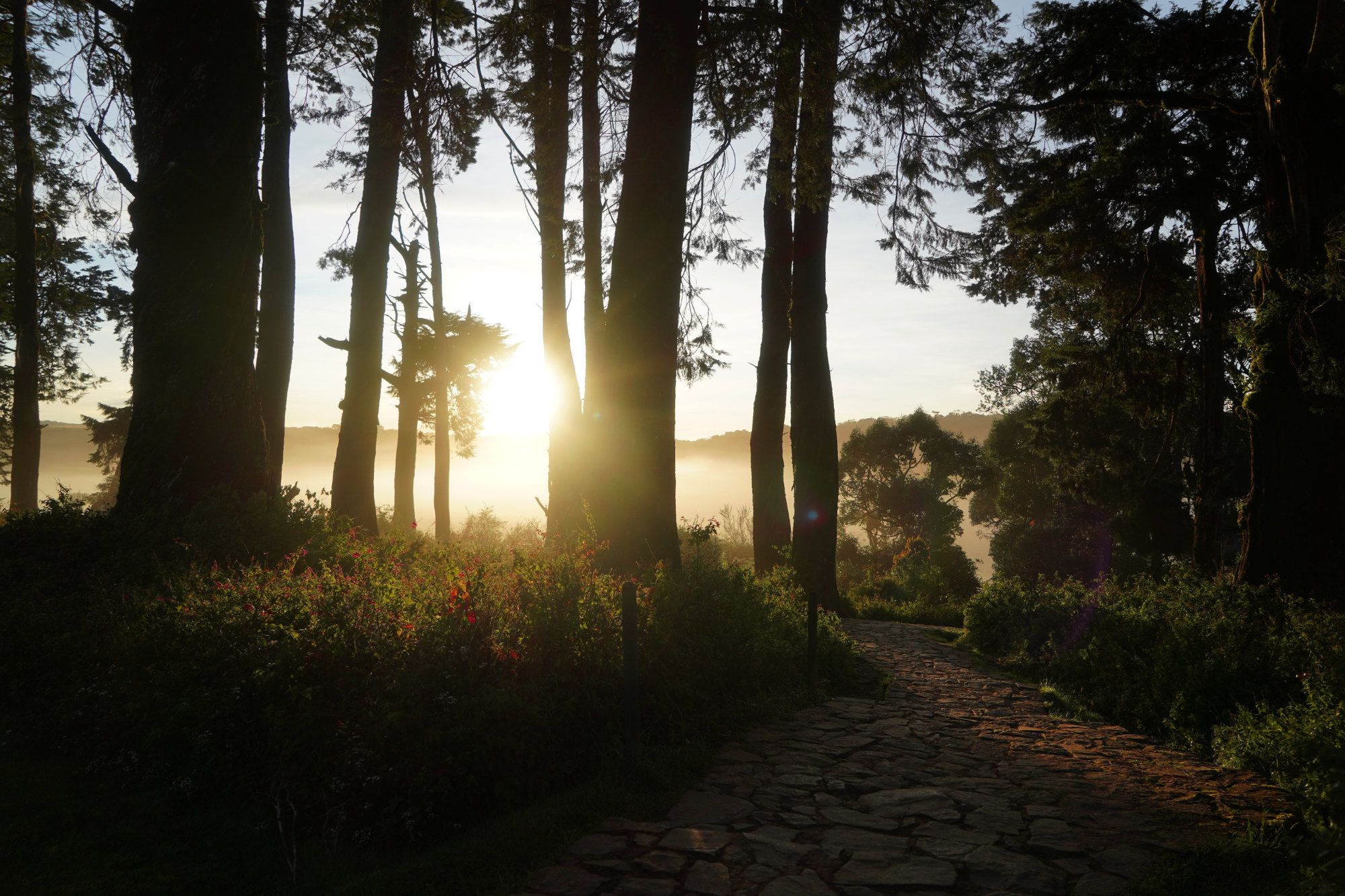 Horton Plains Weg Sonnenaufgang
