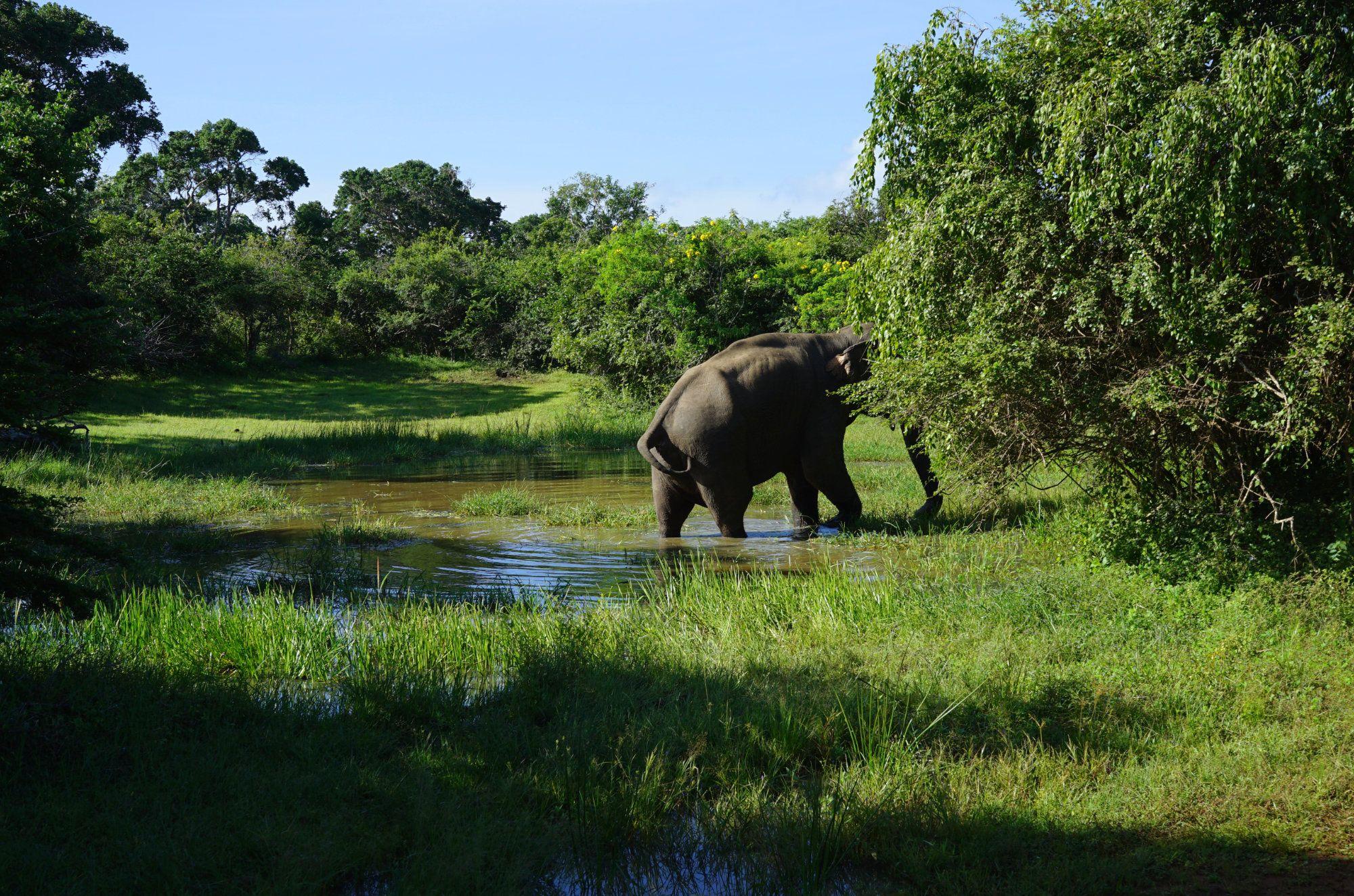 Yala Nationalpark Elefant