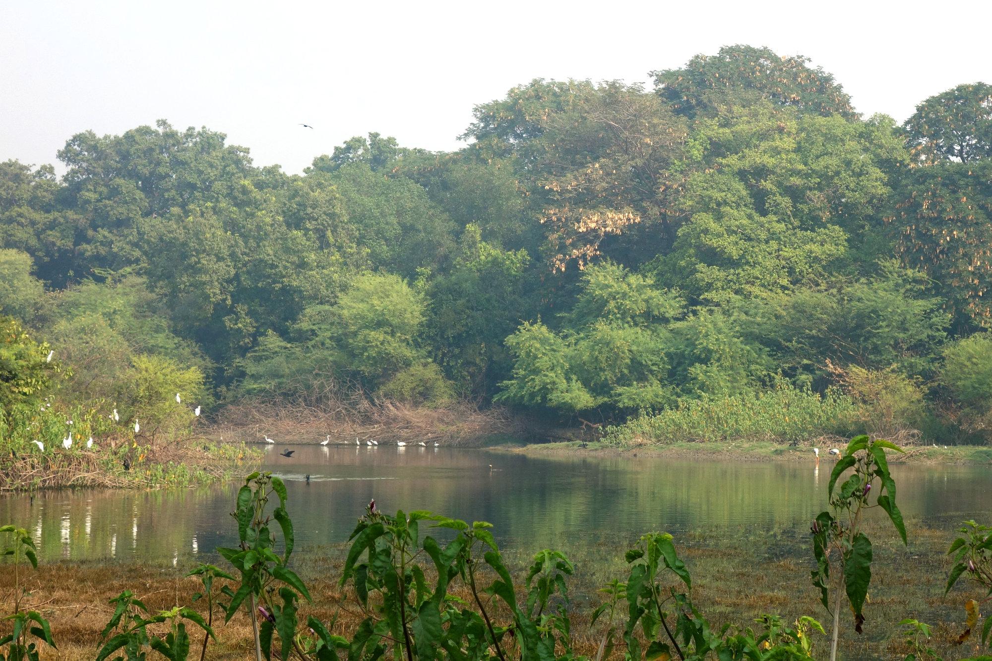 Bharatpur Keoladeo Vogelpark