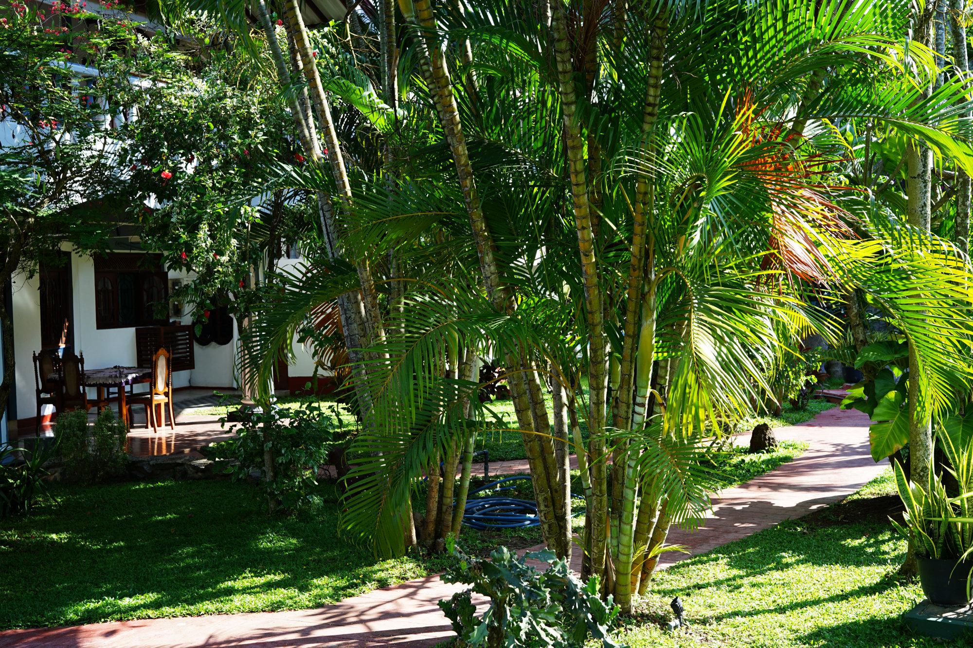 Negombo Lioni Villa Garten