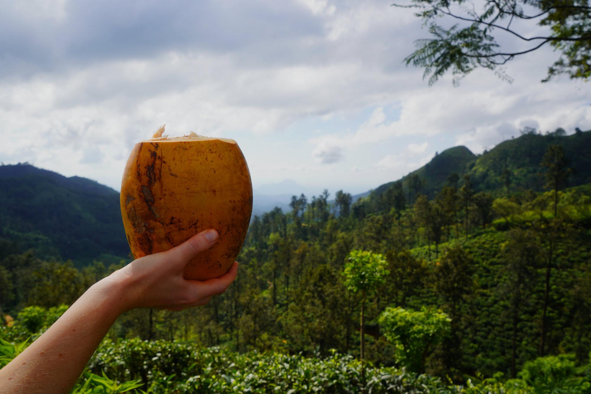 Sri Lanka Kokosnuss vor Wald