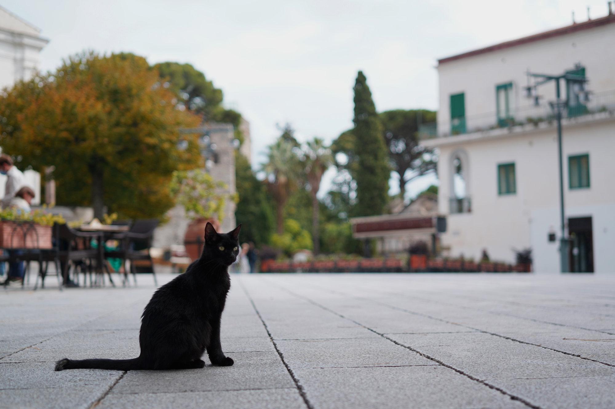 Ravello Piazza Duomo Katze