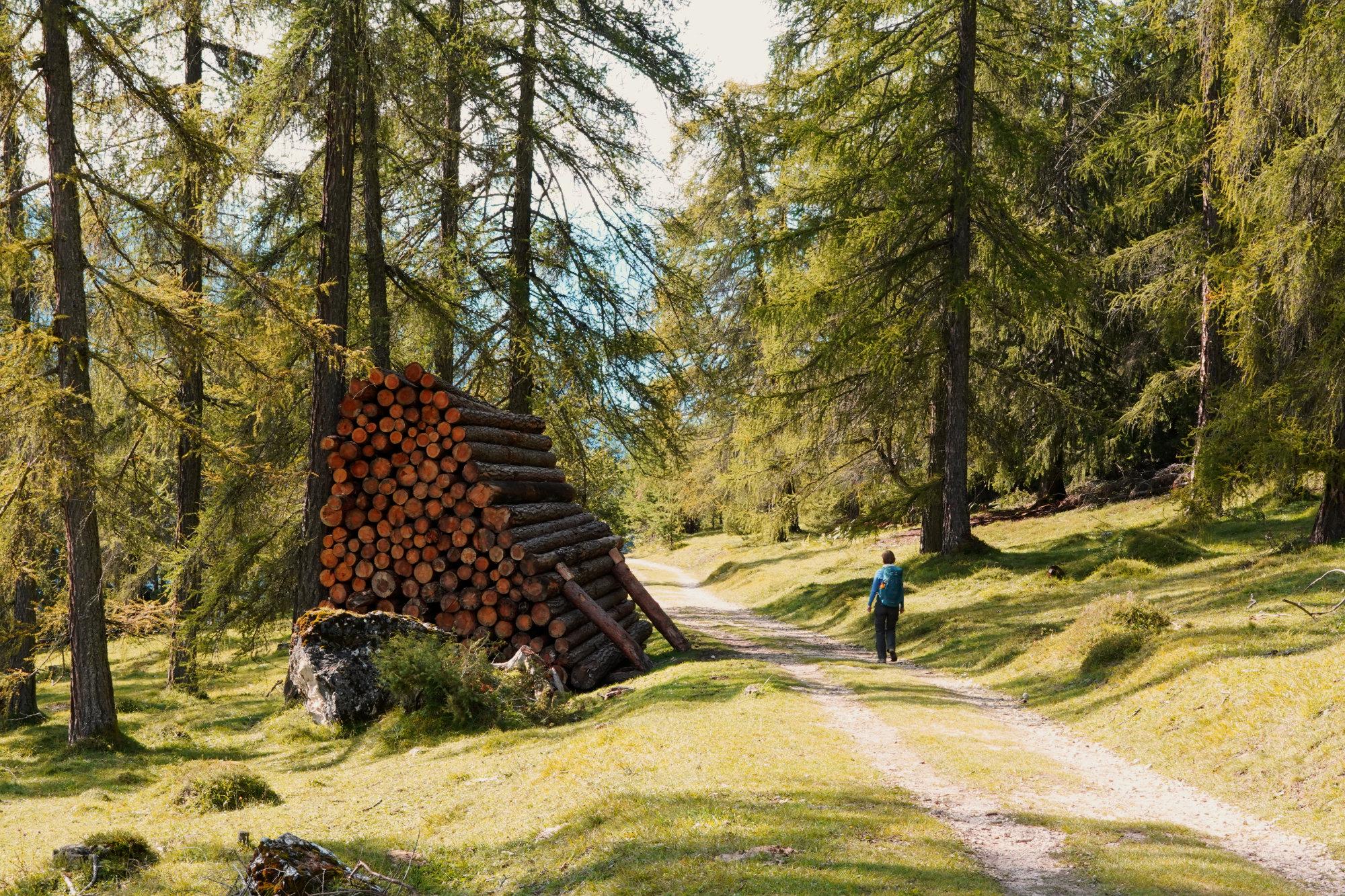 Rosengarten Wanderung Weg Franzi